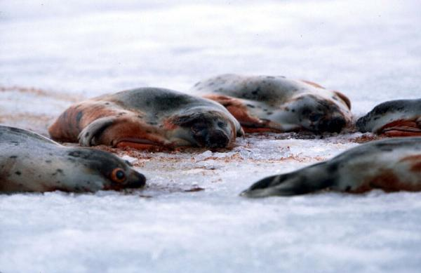 seal protest